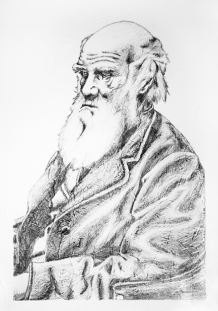 Charles Darwin - Pencil on texture